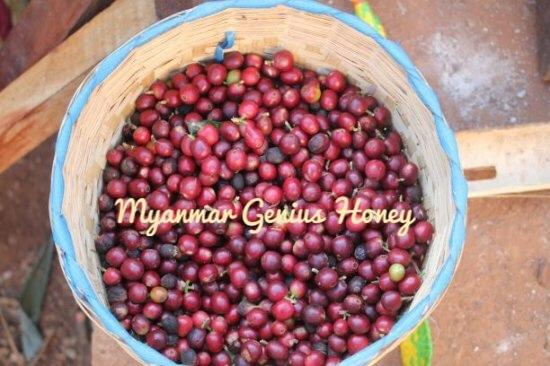 ジーニアスハニー(ミャンマー)中煎り 200g(粉)